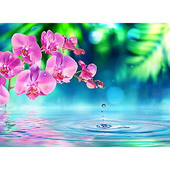 Wallpaper Mural Zen Orchid and Droplets