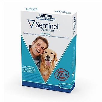 Дозорный спектра для больших собак 50-100lbs(22-45kg), 3 пакет