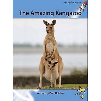 The Amazing Kangaroo