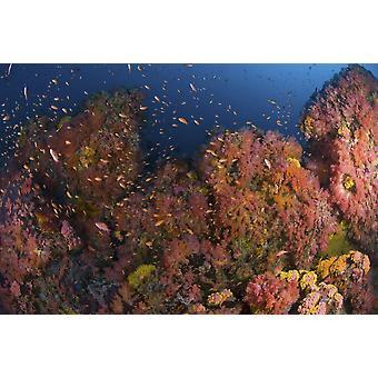 المشهد الشعاب المرجانية مع الشعاب المرجانية والأسماك