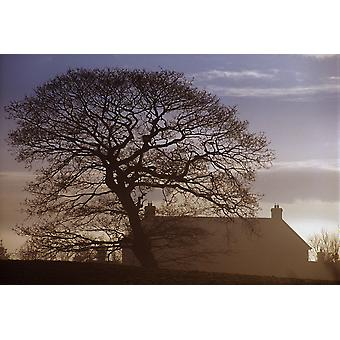 County Tyrone Ireland Winter Morning PosterPrint