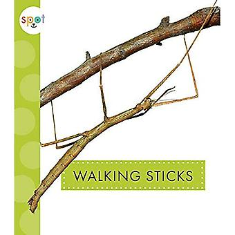 Walking Sticks (Spot Creepy� Crawlies)