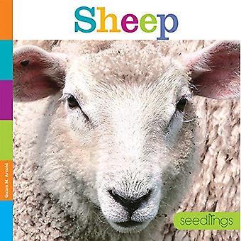 Seedlings: Sheep (Seedlings)