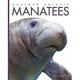 Lamantins (animaux étonnants)