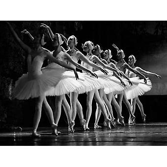 Swan Lake ballet Poster Print by Anonymous
