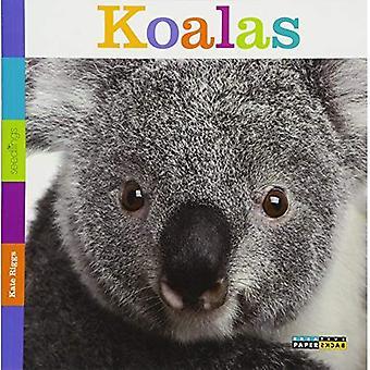 Zaailingen: Koala's