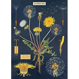 Cavallini Dandelion Chart Wrapping Paper