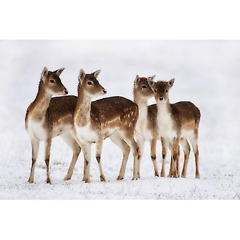 Country Matters Printed Placemat - Christmas Fallow