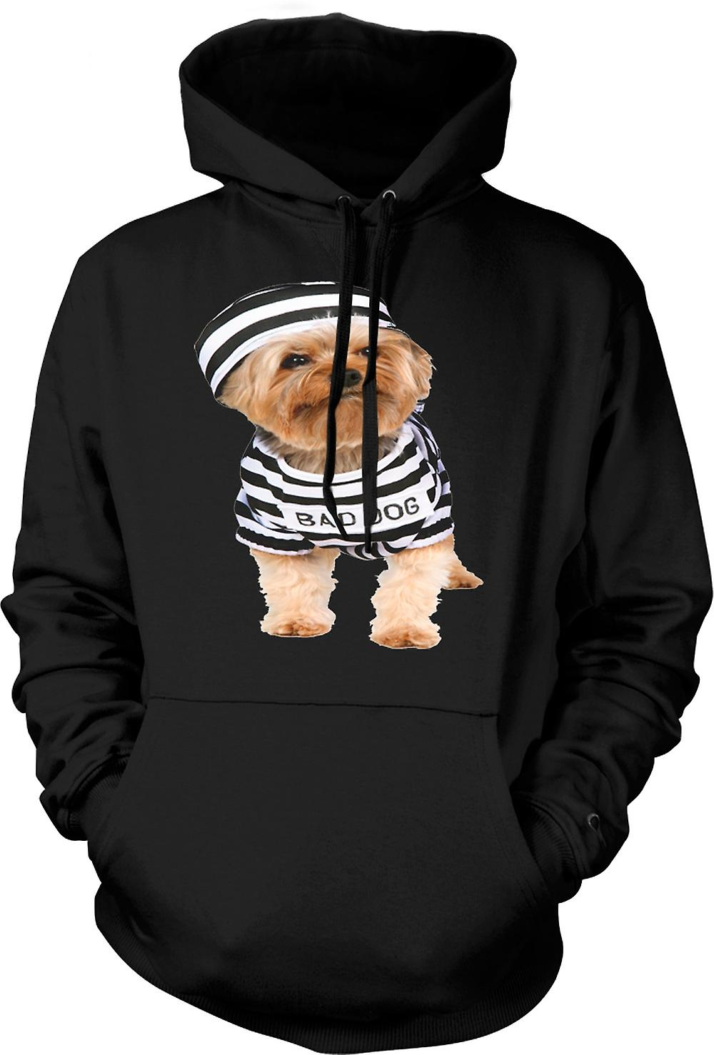 Mens Hoodie - Yorkshire Terrier - Bad Dog