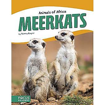 Animals of Africa: Meerkats