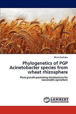 Phylogenetics of PGP Acinetobacter species from wheat rhizosphere by Sachdev & Dhara