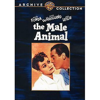 Male Animal [DVD] USA import