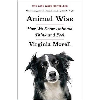 Dierlijke Wise: Hoe weten We dieren denken en voelen