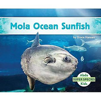 Mola Ocean Sunfish (Super Species)