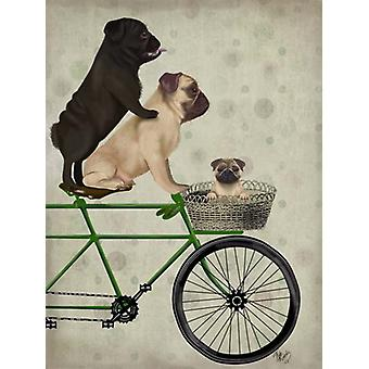 Pugs on Bicycle Poster Print by Fab Funky (13 x 19)