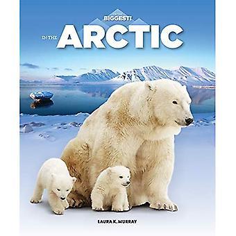 Dans l'Arctique (je suis le plus grand)