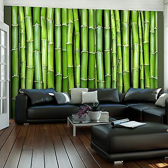 Tapeter - bambu vägg