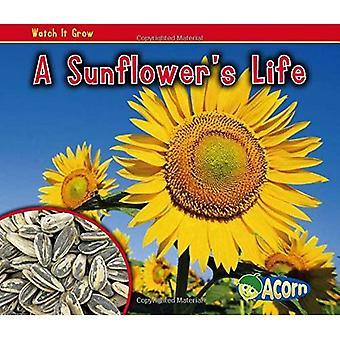 A Sunflower's Life