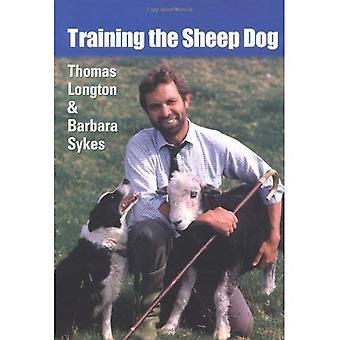 Treinar o cão pastor