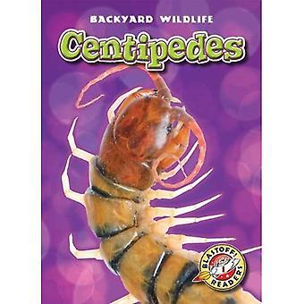 Centipedes (Blastoff! Readers: Backyard Wildlife: Level 1)