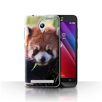 STUFF4 Case/Cover for Asus Zenfone Go ZC500TG/Racoon/Wildlife Animals