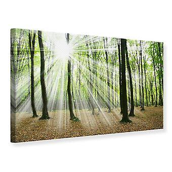Lærred Print magiske lys i træerne