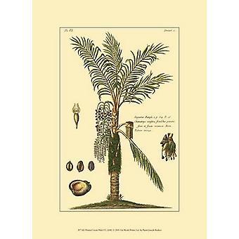 Printed Exotic Palm VI Poster Print by Pierre-Joseph Buchoz (10 x 13)