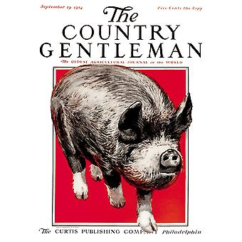 Cover of Country Gentleman agricultural magazine from the early 20th century  PosterPrint