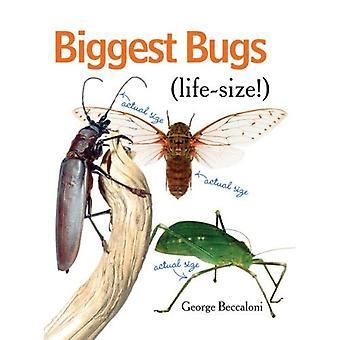 Grootste Bugs levensgrote
