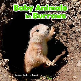 Baby Animals in Burrows (Little Pebble: Baby Animals and Their Homes)