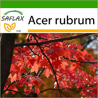Saflax - 20 seeds - With soil - Red Maple - Erable rouge - Acero rosso  - Arce rojo - Rotahorn