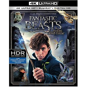 Fantastic Beasts & Where to Find Them [Blu-ray] USA import