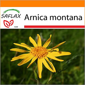 Saflax - Garden in the Bag - 40 seeds - Mountain Arnica - Arnica des montagnes - Arnica  - Árnica - Echte Arnica