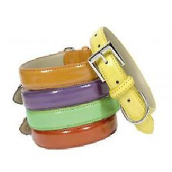 Doggy Things CHAROL NARANJA COLLAR (Dogs , Walking Accessories , Collars)