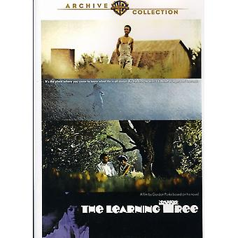 Learning Tree [DVD] USA import