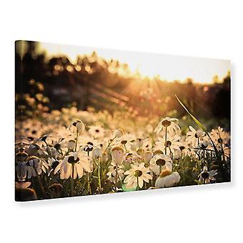 Canvas Print Daisies At Sunset