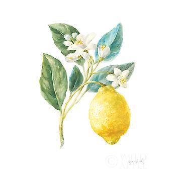 Floursack Lemon I on White Poster Print by Danhui Nai