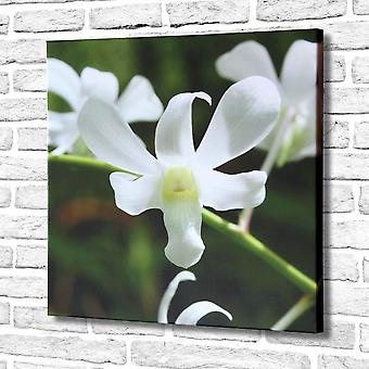 Photo Canvas Snowdrop White Flowers, Wall Art 60 x 60 cm Attached to Real Wooden Framework