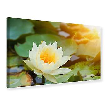 Canvas Print Romantic Waterlily