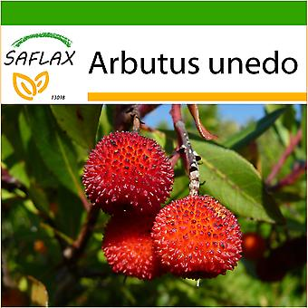 Saflax - 50 seeds - With soil - Strawberry Tree - Arbousier - Albatro - Árbol de las fresas - Erdbeerbaum