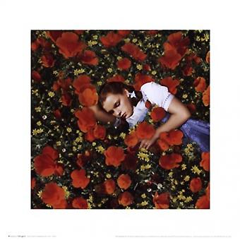 Wizard of Oz - Dorothy Poppies Poster Poster Print