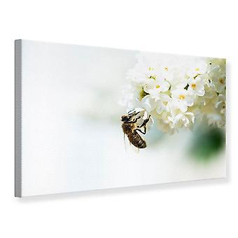 Canvas afdrukken de hommel en de bloem