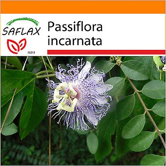 Saflax - Garden in the Bag - 5 seeds - Wild Passion Flower - Passiflore officinale - Fiore della passione - Flores de la pasión - Passionsblume