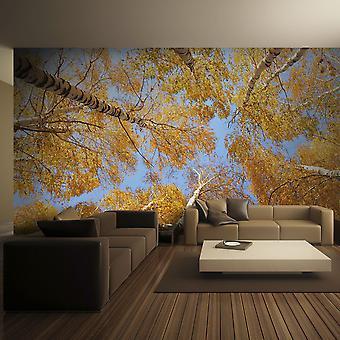 Wallpaper - copas de los árboles otoñales