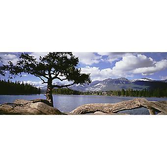 Arbre et arbre abattu à côté du lac Beauvert PosterPrint