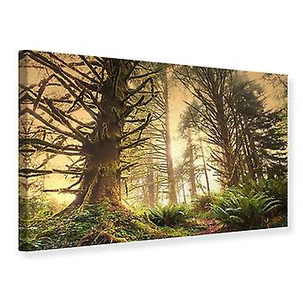 Canvas Print Sunset In Jungle