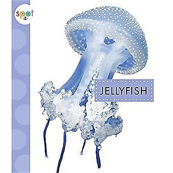 Jellyfish (Spot Ocean Animals)
