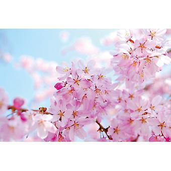 Fond d'écran fresque fleur de cerisier
