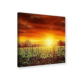 Leinwand drucken Weinberg bei Sonnenuntergang