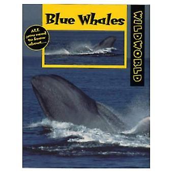 Blue Whales (Wild World)